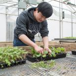 Student working in the University Park green house.