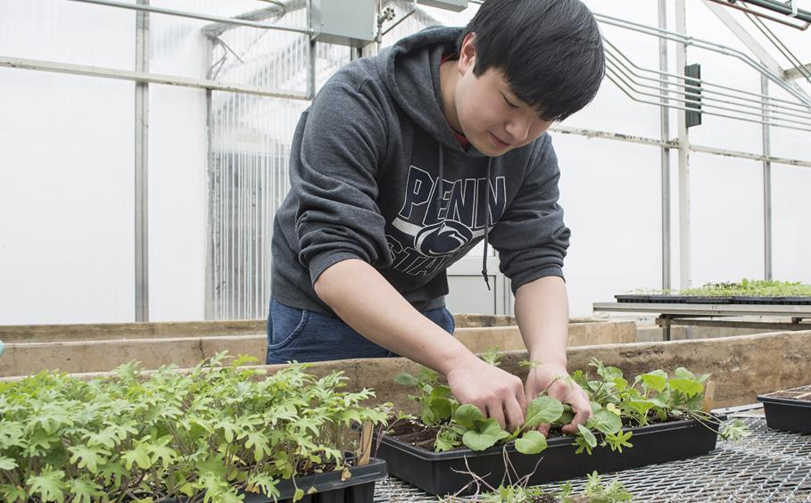 Student working in greenhouses at University Park.